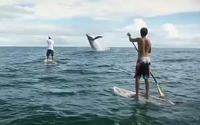 Stand Up Paddle Colombia